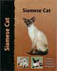 Siamese Cat - Pet Love