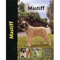 Mastiff - Pet Love