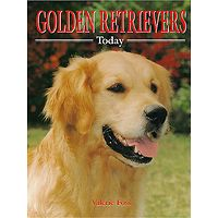 Golden Retrievers Today