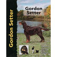 Gordon Setter - Pet Love
