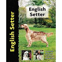 English Setter - Pet Love