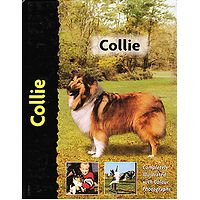 Collie - Pet Love