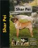 Shar Pei - Pet Love