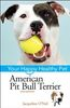 American Pit Bull Terrier Your Happy Healthy Pet