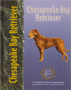 Chesapeake Bay Retriever - Pet Love