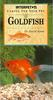 Caring for Your Pet Goldfish