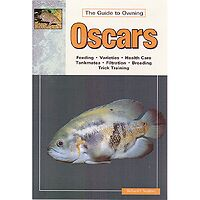 Oscars - Guide to Owning