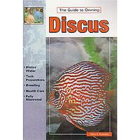 Discus - Guide to Owning