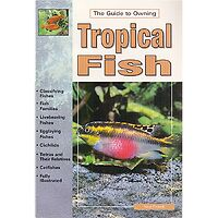 Tropical Fish - Guide to Owning