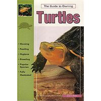 The Guide to Owning Turtles