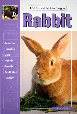 Guide To Owning A Rabbit