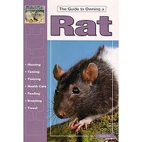 Rat - The Guide to Owning