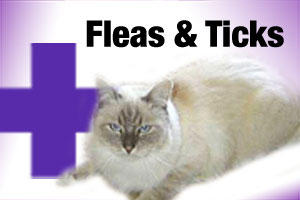 Flea and tick treatment for cats and kittens