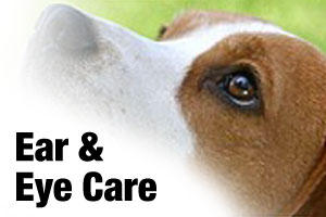 Ear and eye care products for dogs