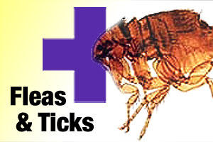 Tick and flea treatment for dogs and puppies
