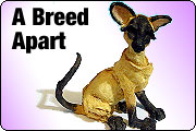 A Breed Apart collectibles