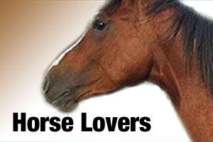Products for horse lovers and owners