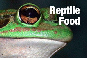 Food for reptiles and lizards