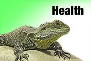 Health care products for reptiles, snakes and lizards