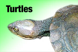 Pet products for turtles
