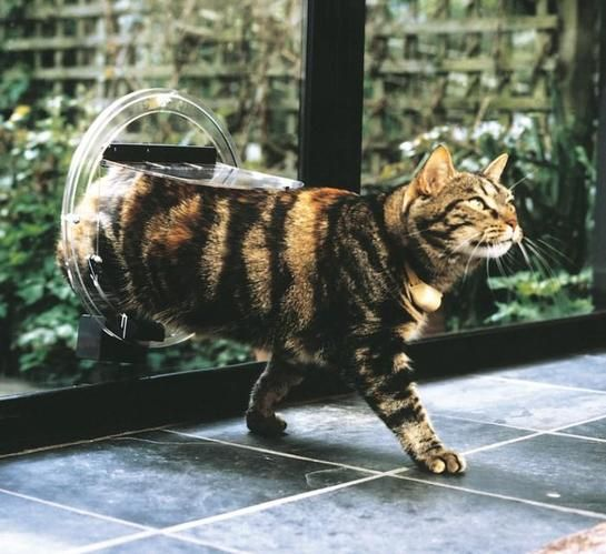 Transcat Cat Door Clear Dog Cats And Pet Doors Ozpetshop