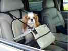 Puppy Platform/Small Dog Booster Car Seat