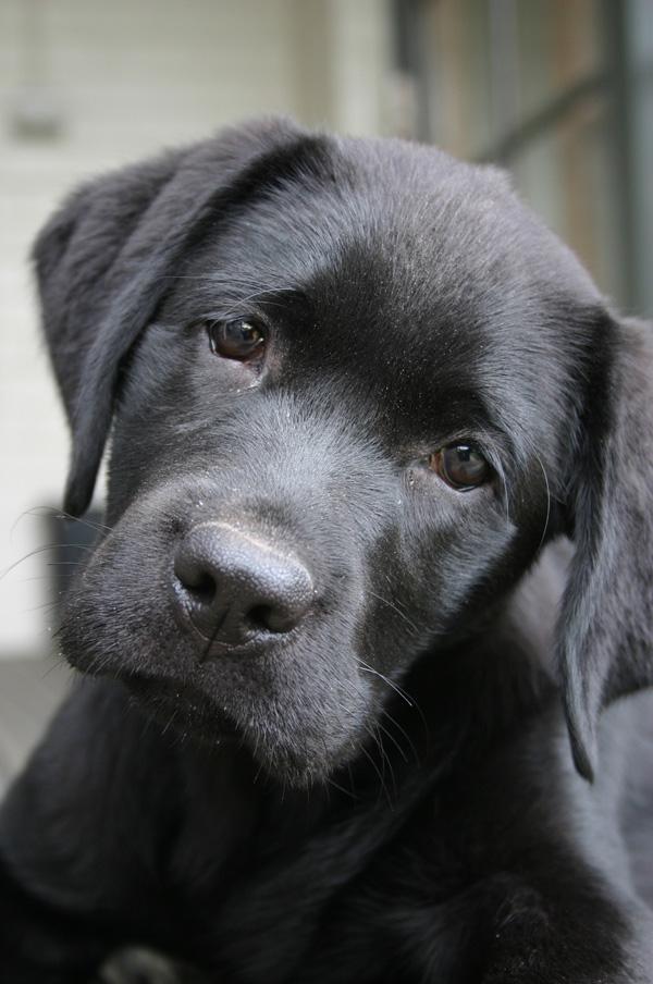 dog breeding for dummies pdf