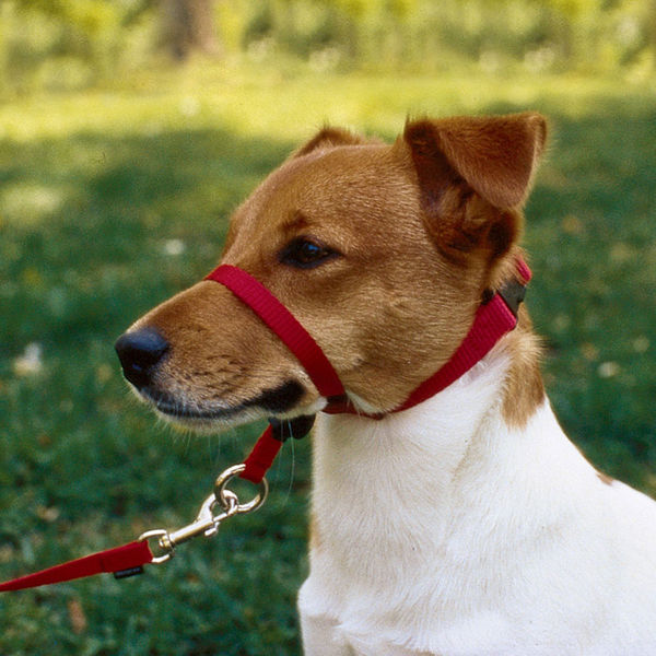 Gentle Halti Head Collars For Dogs