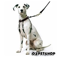 Sporn Training Halter / Harness