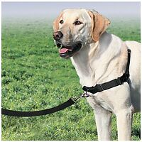 PetSafe Easy Walk Dog Harness includes lead