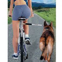 Walky Dog Plus Bike Trainer
