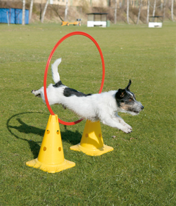 In The Hoop Dog Toys
